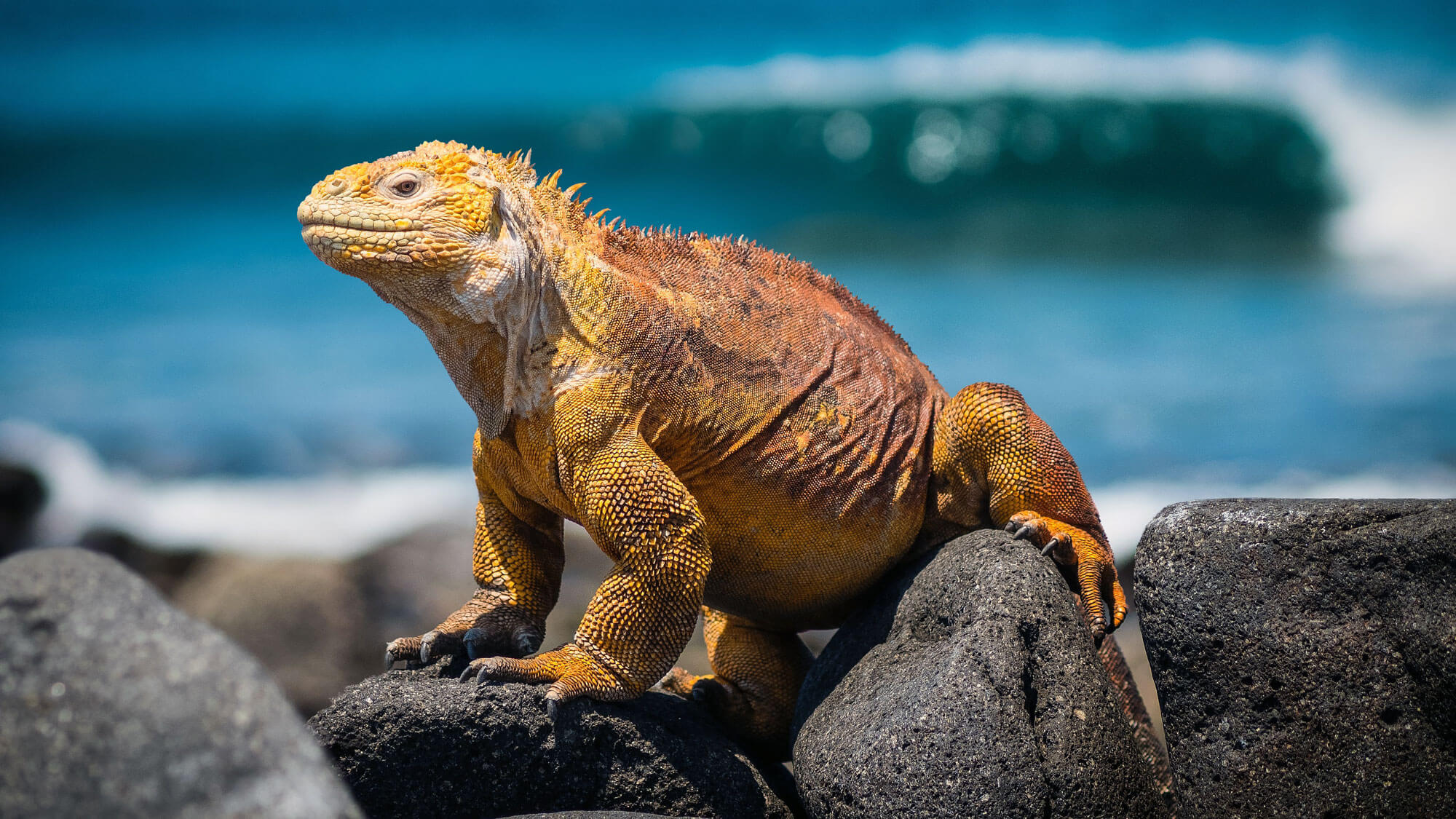 Galápagos islands is home to many interesting creatures