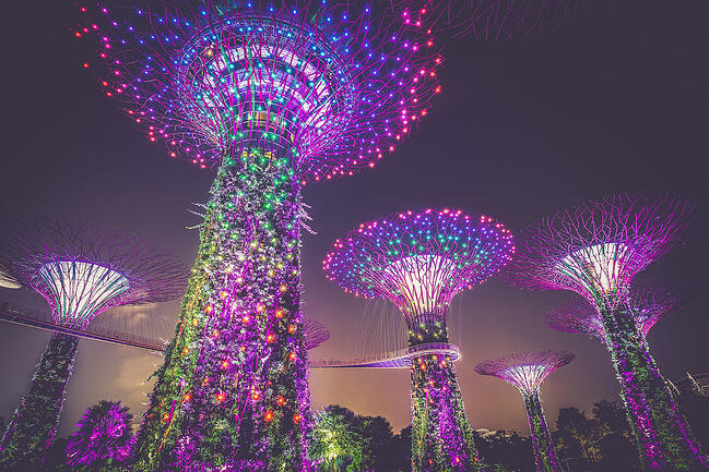 Innovative trees